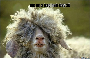 bad-hair-day_o_1746607